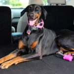 Travel Safety Tips for Dog Owners