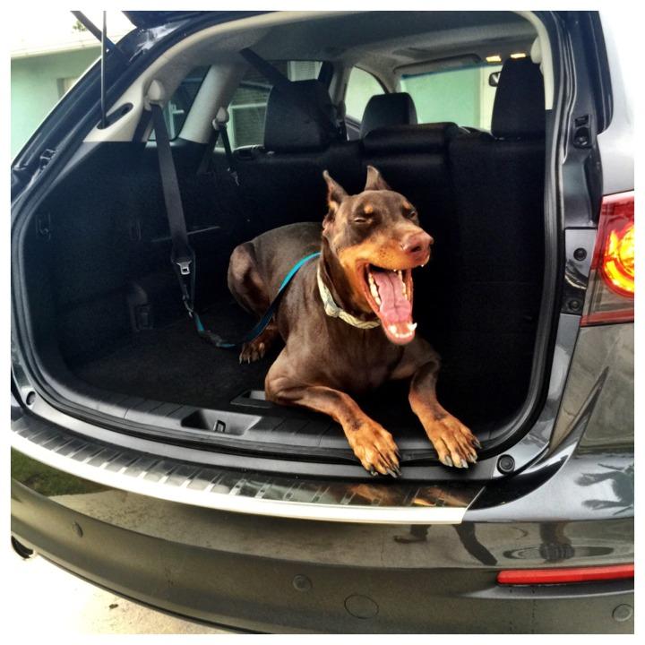 Big Dog Friendly SUV