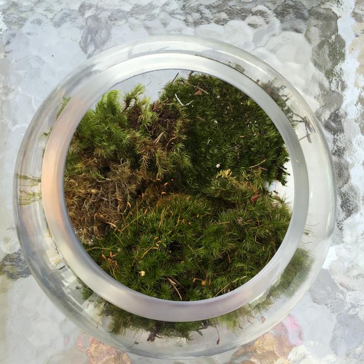 diy-succulent-terrarium-3