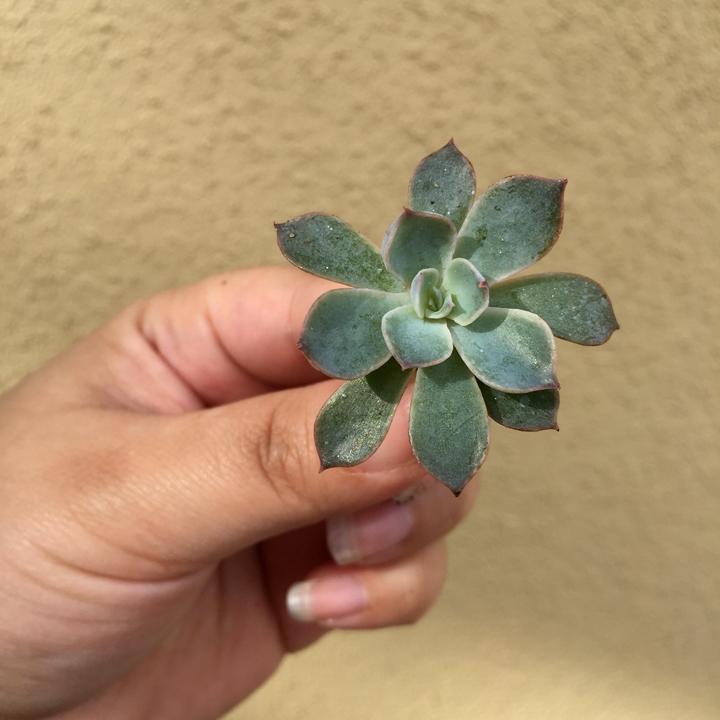 diy-succulent-terrarium-5