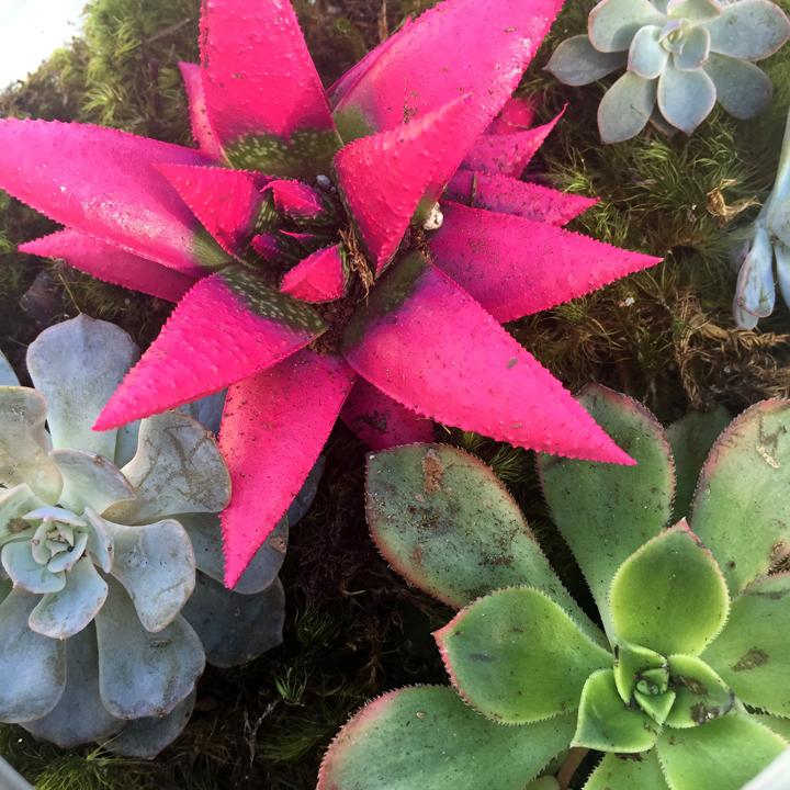 diy-succulent-terrarium-6