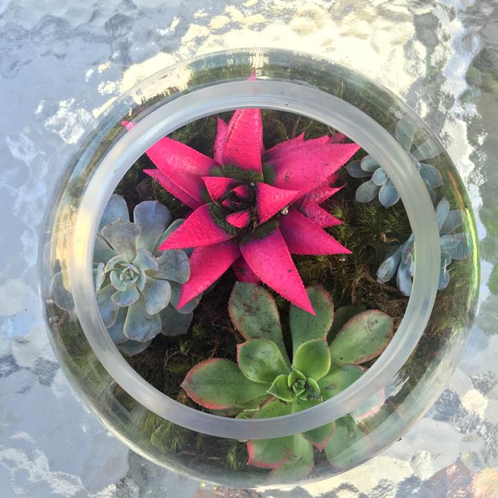 diy-succulent-terrarium-7