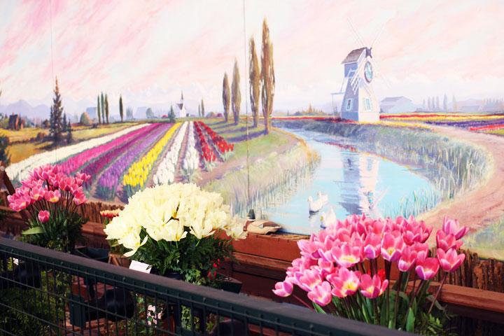 skaggit-valley-tulip-festival-8